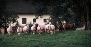 woonboerderij technische keuring